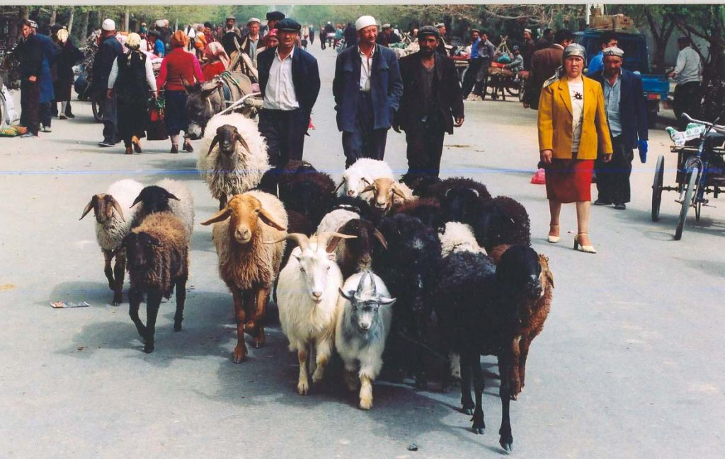 Uyghurs and sheep