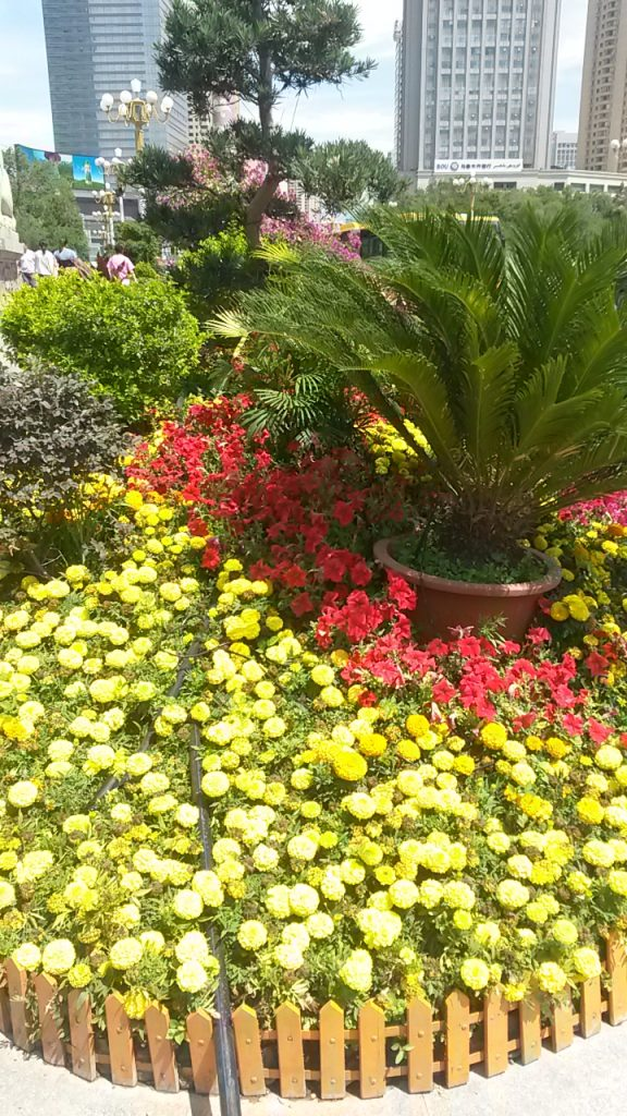 Patriotic display of red and yellow border flowers in the center of Urumqi 2018.